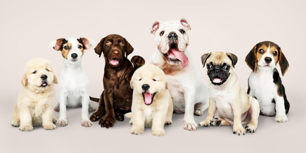 diferentes tipos de cachorro que podem estar em um espaço pet em condomínio